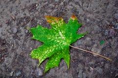 Feuille verte tombée au sol Photo stock