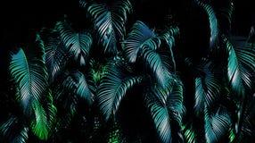 Feuille verte tropicale image libre de droits