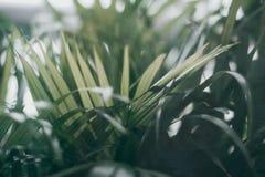 Feuille verte tropicale brouillée en dehors de la fenêtre Photos stock