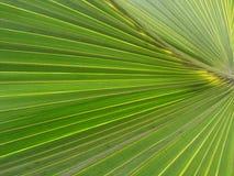 Feuille verte uniforme d'arbre Image stock