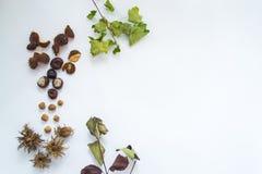 Feuilles, écrous et châtaignes d'automne sur un fond blanc Image stock