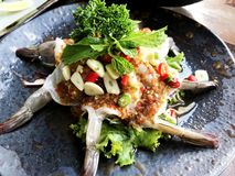 Feuilles épicées de Passley de menthe poivrée de piment d'ail de nourriture de crevette photographie stock