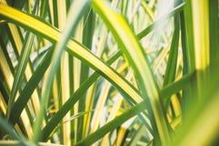 Feuilles étroites vertes et jaunes abstraites Images libres de droits