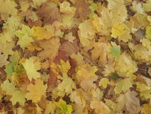 Feuilles Photographie stock