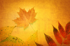 Feuilles abstraites d'automne sur le fond orange Photographie stock libre de droits