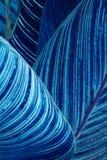 Feuilles abstraites de bleu Photos libres de droits