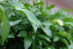 Feuilles après pluie Image stock