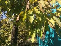 Feuilles, arbre Photo stock