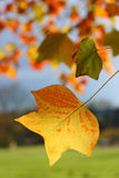 Feuilles automnales Image stock