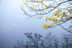 Feuilles automnales de jaune sur les branches d'arbre côtières Image stock