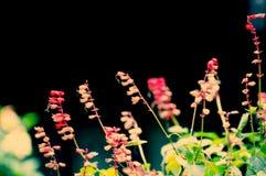 Feuilles automnales rouges au Thibet Image stock