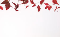 Feuilles automnales rouges et brunes sur le fond blanc Configuration plate Vue supérieure Image stock
