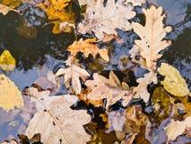 Feuilles automnales sur la surface de l'eau Photos stock