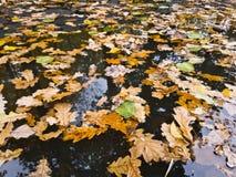 Feuilles automnales sur la surface de l'eau Photo stock