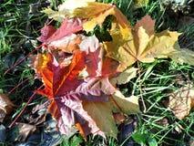 Feuilles Autumn Motives Photo libre de droits