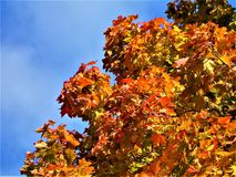 Feuilles Autumn Motives Photographie stock