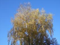Feuilles Autumn Motives Images libres de droits