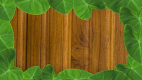 feuilles avec le fond en bois brun de mur Photos stock