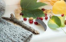 Feuilles, baies et noisettes d'automne photographie stock