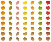 Feuilles changeant des couleurs Autumn Brown Wither illustration libre de droits