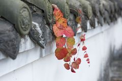 Feuilles classiques d'arbuste de mur de la Chine Photos libres de droits