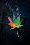 Feuilles colorées Photo stock