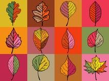 Feuilles colorées Image stock