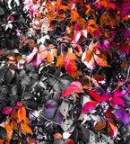 Feuilles colorées Photo libre de droits