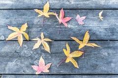 Feuilles colorées Image libre de droits