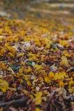 Feuilles colorées au sol Image libre de droits