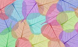 Feuilles colorées décoratives de squelette Photo libre de droits