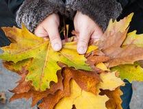 Feuilles colorées d'érable dans les mains Photo libre de droits