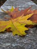 feuilles colorées d'érable sur le trottoir Images libres de droits