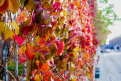 Feuilles colorées d'arbre en Autumn On The Roadside Image stock