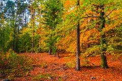 Feuilles colorées d'arbres forestiers de profondeurs d'automne Photos stock