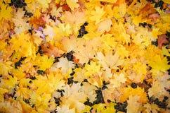 Feuilles colorées d'automne au sol Photos stock