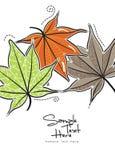Feuilles colorées d'automne/feuilles d'érable Photo stock