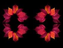 Feuilles colorées d'automne sur un fond noir images libres de droits