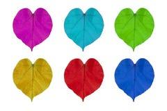 Feuilles colorées d'usine, forme de coeur, d'isolement sur le fond blanc Symbole de l'amour Photo stock