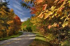 Feuilles colorées dans Great Smoky Mountains, TN, Etats-Unis Image libre de droits