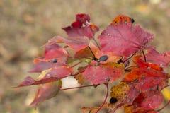 Feuilles colorées dans la chute sur la branche Photographie stock