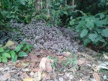 Feuilles colorées de pourpre dans la forêt Image libre de droits