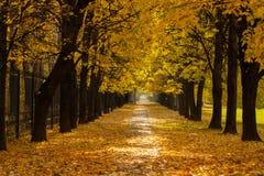 Feuilles colorées de tas d'Autumn With Road Covered With en parc photographie stock