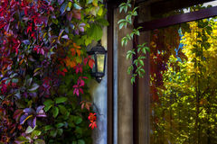 Feuilles colorées de vigne reflétées dans le verre de fenêtre Photographie stock
