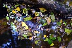 Feuilles colorées et fleurs flottant sur l'eau Photos stock