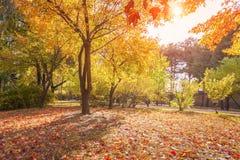 Feuilles colorées pendant l'automne en parc Photo libre de droits