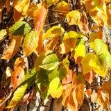 Feuilles colorées sur le tronc d'arbre Image stock