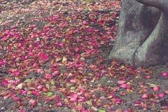 Feuilles colorées tombant au sol près de l'arbre en hiver saisonnier Images stock