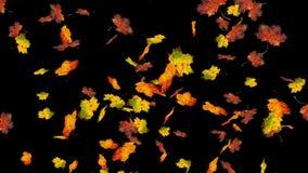 Feuilles colorées volantes d'érable Automne, fond d'automne Mouvement lent, animation 3D réaliste du plan rapproché HD clips vidéos