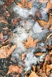 Feuilles congelées Images libres de droits